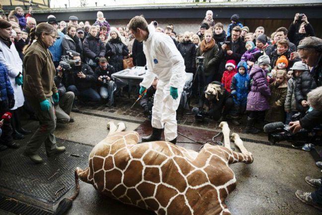 9 февраля 2014, зоосад Копенгагена. Молодые европейские «гуманисты» через минуточку узнают, «из чего состоит жираф»