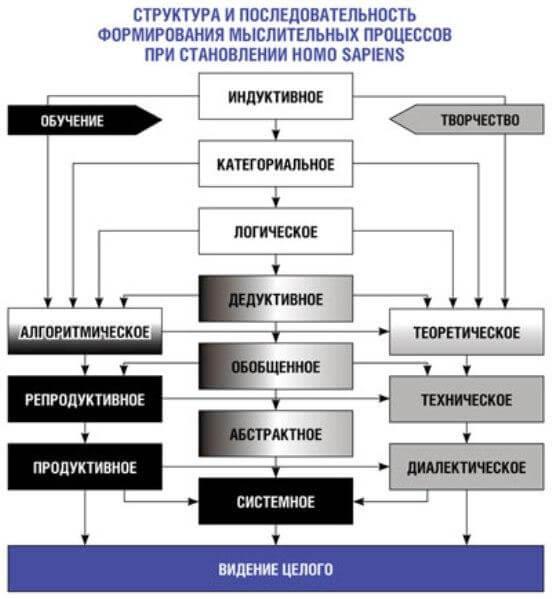 Структура и последовательность мыслительных процессов человека